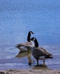 Lake Josephine, Roseville, Minnesota.